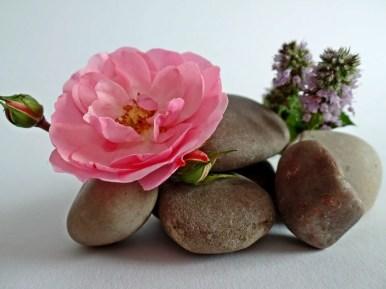 Gladde stenen en een roze bloem.