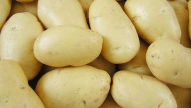 البطاطا المسلوقة مفيدة لخسارة الوزن في اسبوع