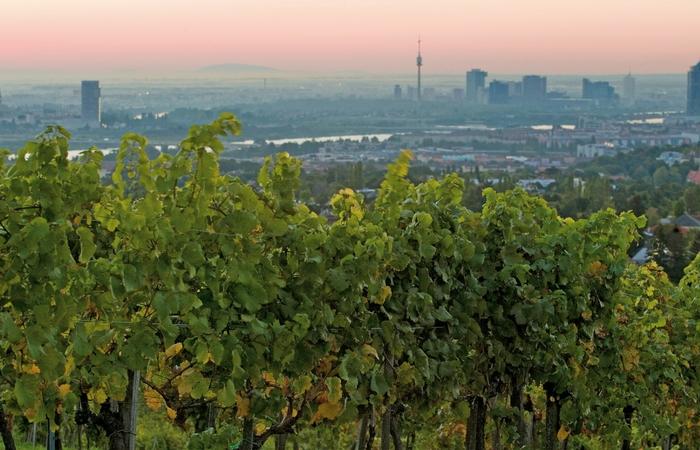 Panorámica de la ciudad desde los viñedos. Foto: © Vienna Tourist Board, Lois Lammerhuber