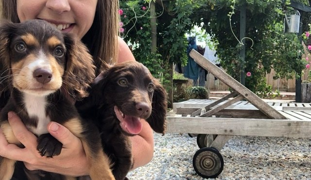 SOCIALISING PUPPIES – HOW TO DO IT RIGHT!