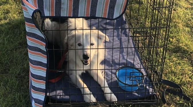 Dog Crate Training – Do I Need it?