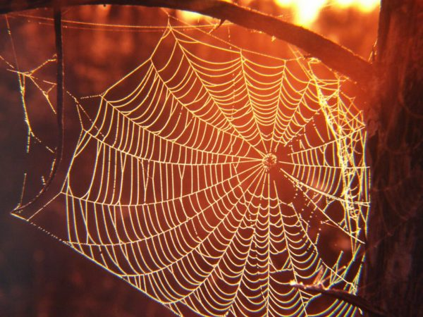 The Spider web and its relation to Kente Cloth