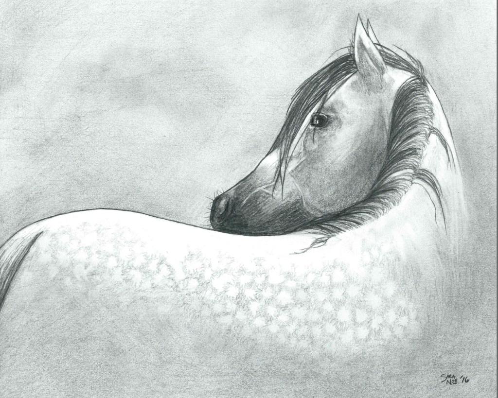 Dapple Gray pencil artwork Sara A. Noe