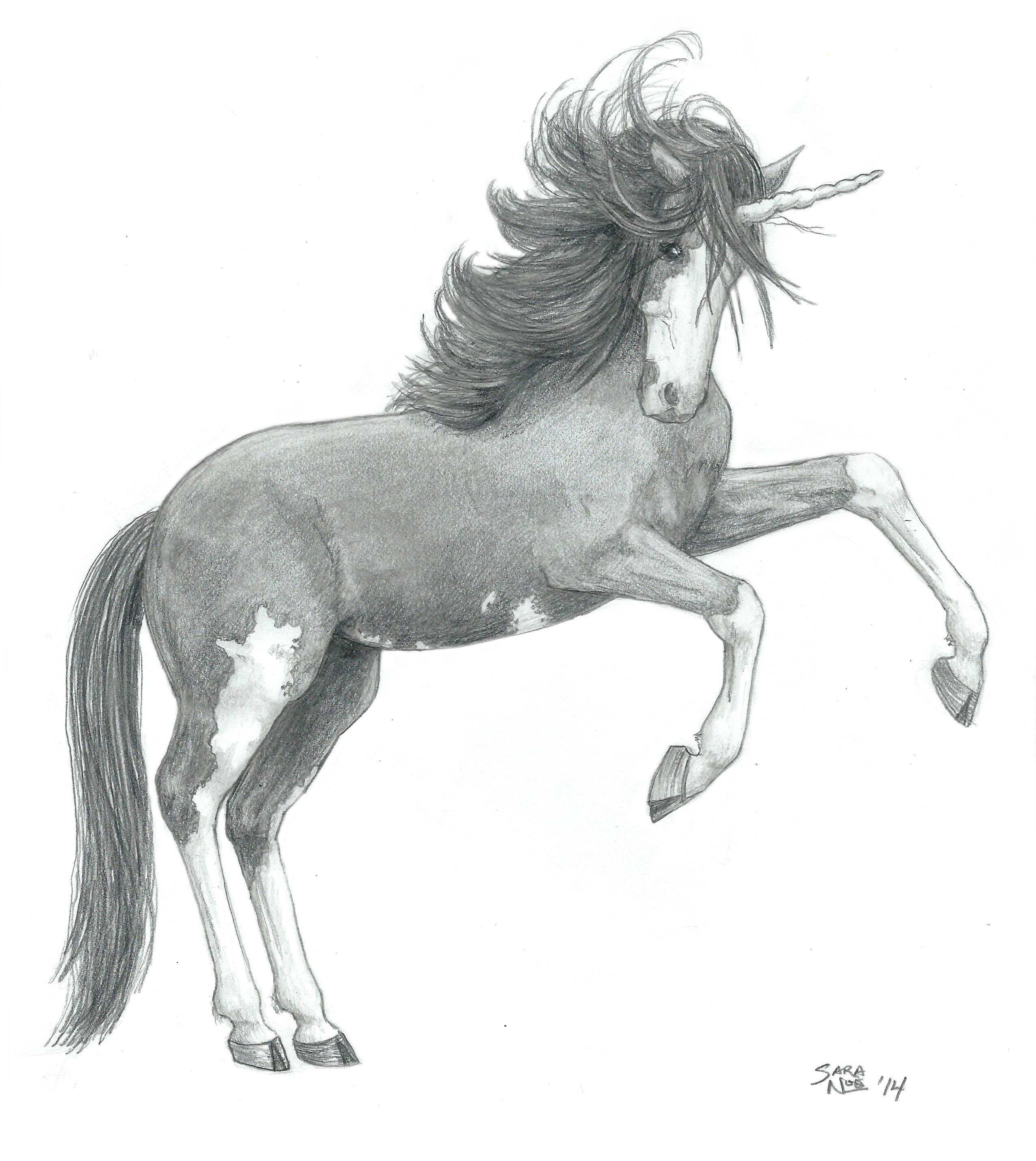 Unicorn Chronicles of Avilesor pencil artwork horse Sara A. Noe