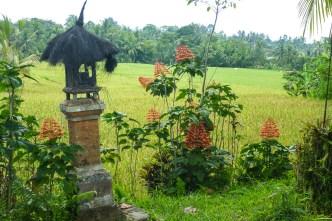 Bali Rice Walk-2