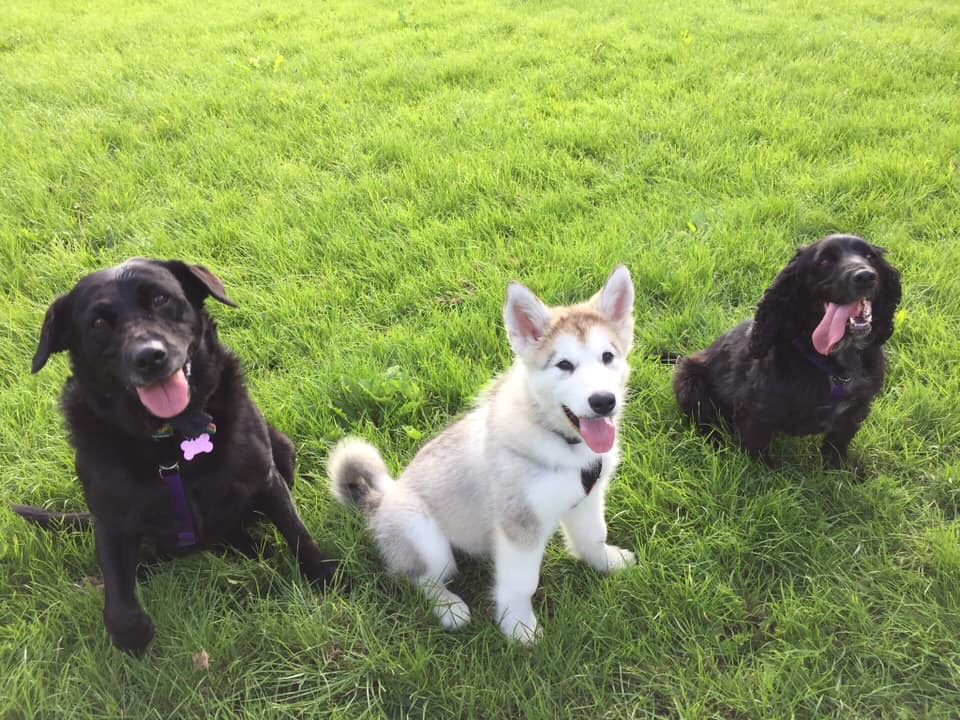Three Dogs Offlead Happy On The Levels Dog Walking