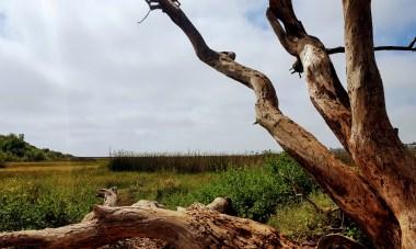 tree and lagon vista
