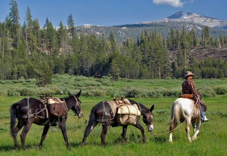 4-11 - Voglesang mule train