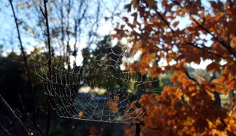 More frosty webs