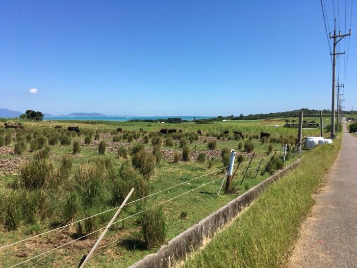 牛の牧草地の向こうに海が見える