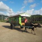 由布島へと渡る水牛車