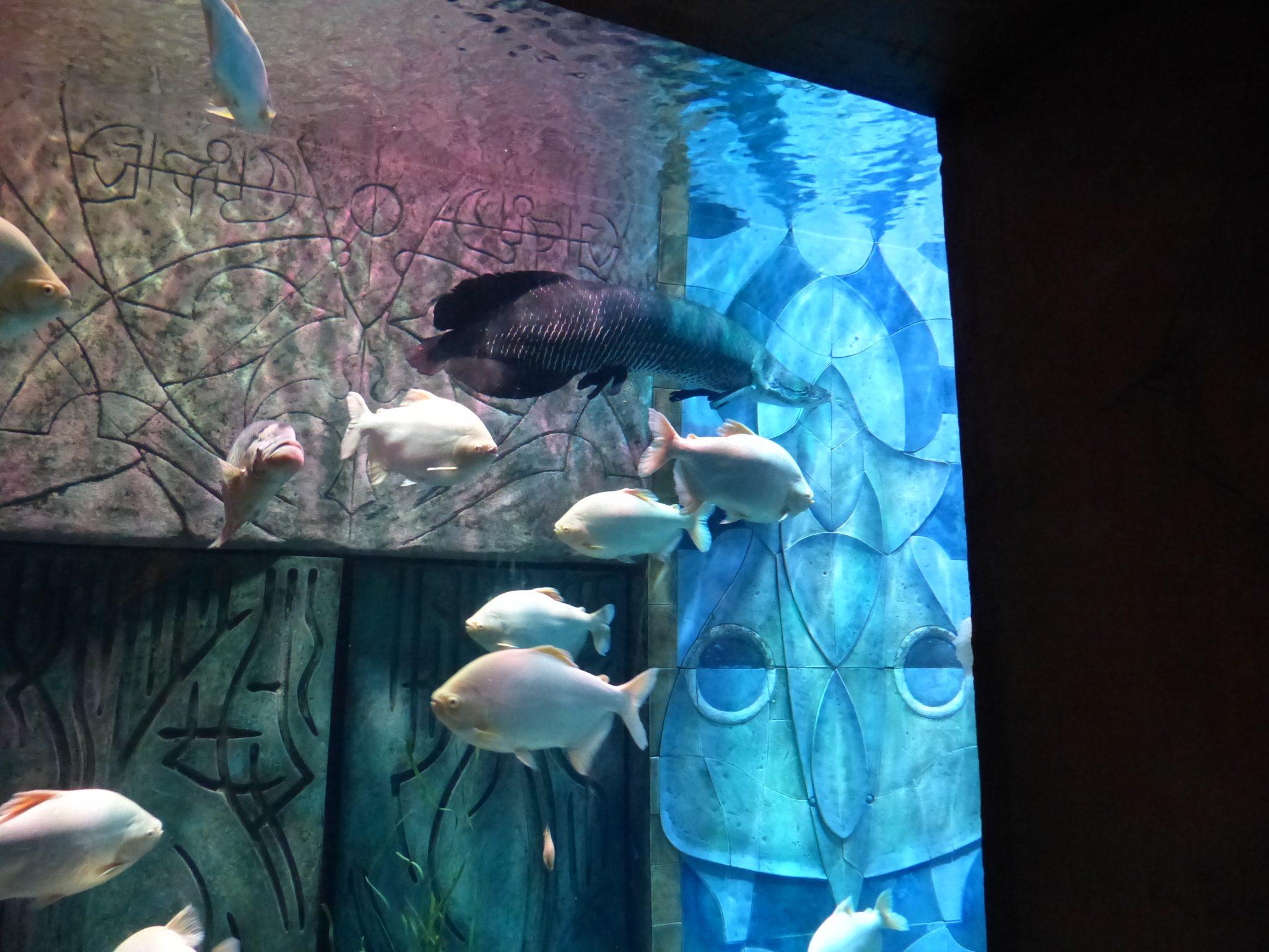 Fische zum bestaunen