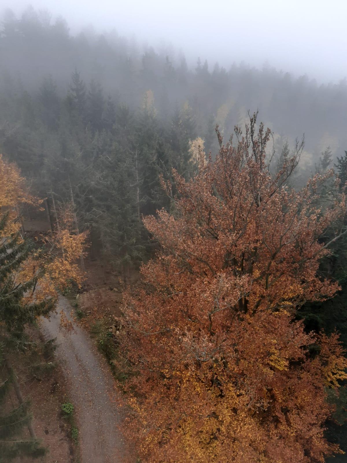 Waldwipfelweg St. Englmar Aussicht