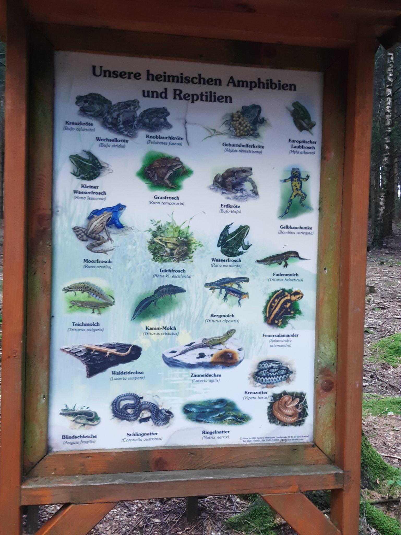 über Tiere lernen