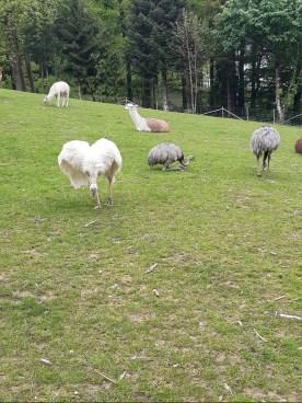 Vogelpark Ortenburg