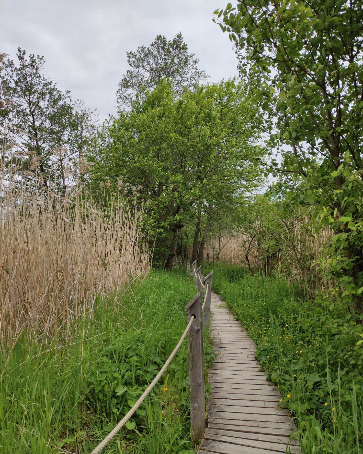 Obertrumer See Naturerlebnisweg