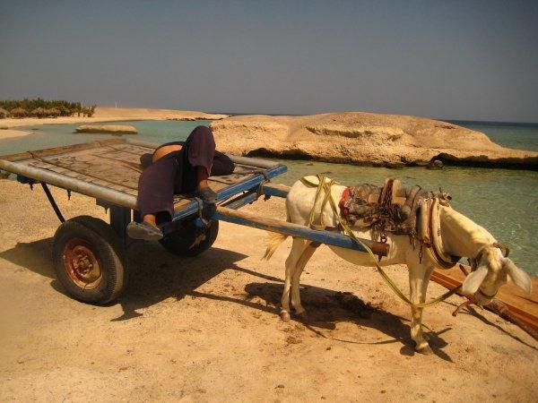 egypt2010a1634