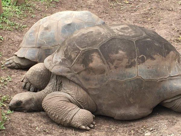 Schildkröten (Hektik geht anders...)