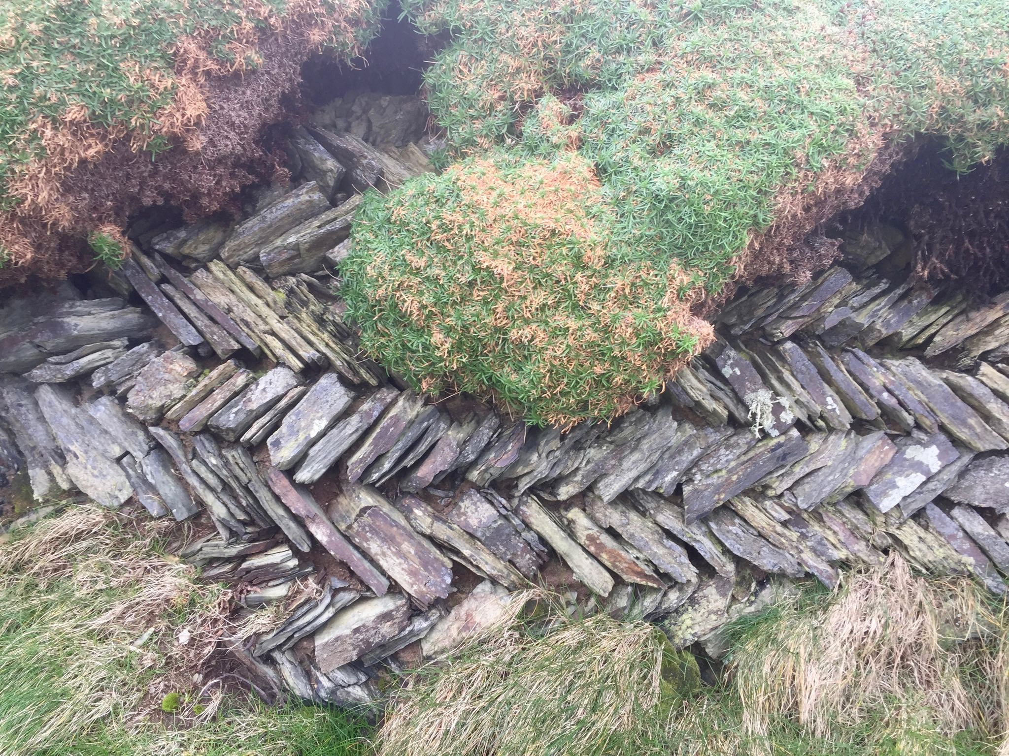 A hedge on the Cornwall coast