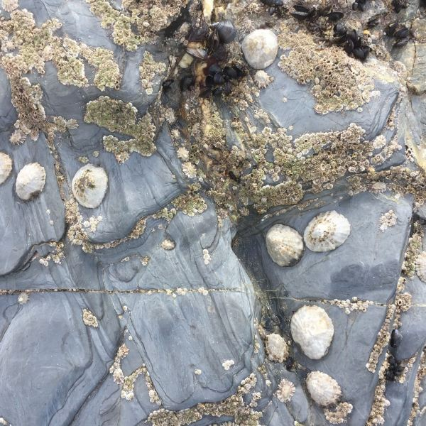 A beach in Cornwall covered with sea life