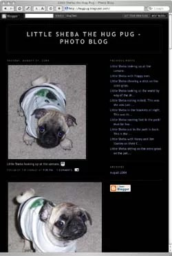 Sheba the Hug Pug's photo blog