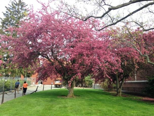 hub lawn tree