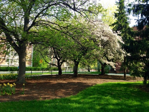natatorium tree