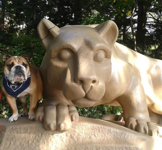 bull dog shrine