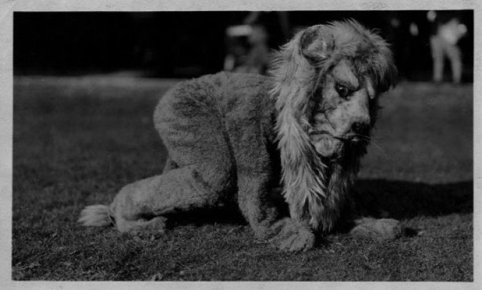 1929 nittany lion--penn state archives
