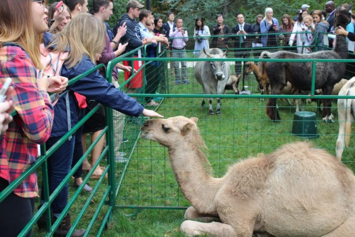 camel hub homecoming