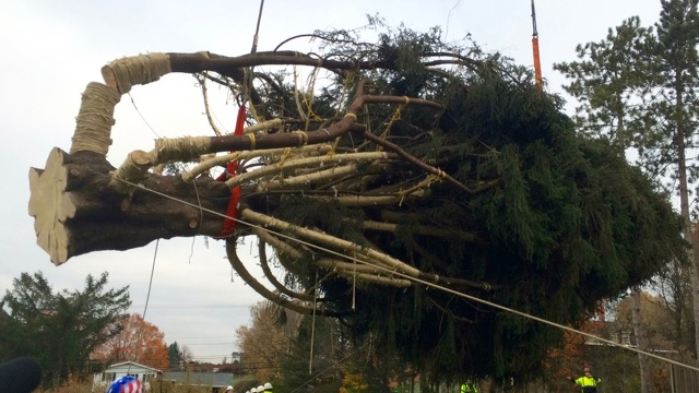 State College Area Tree Headed To Rockefeller Center