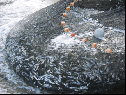 The Developed Fishing Industry - Google Sites