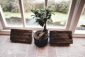 The Enchantment Chamber - window