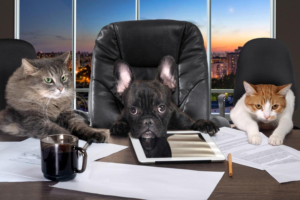 Businessmen in office.