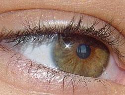 Uitleg van het oog door Oog voor Optiek