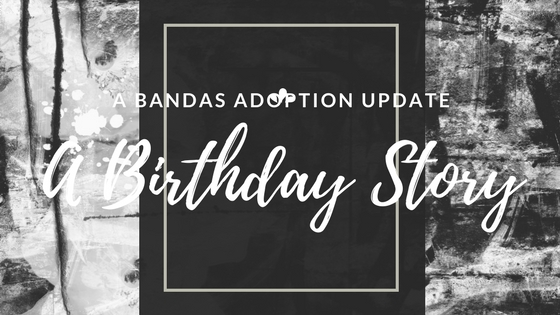 A Bandas Adoption Update - A Birthday Story