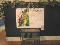 昆虫イベント 江釣子ショッピングセンターパル07