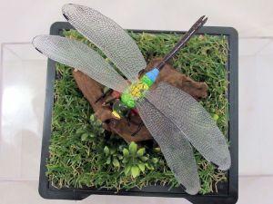 ギンヤンマ(銀蜻蜓)♂76_01