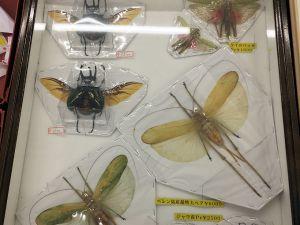 大型標本は飛翔