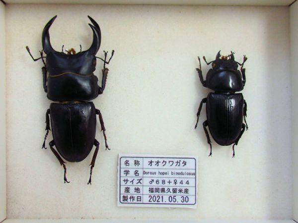 heiookuwa-hc004
