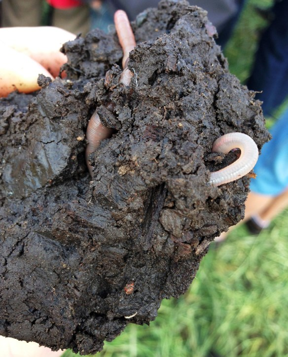 Soil with an organic matter level over 10%