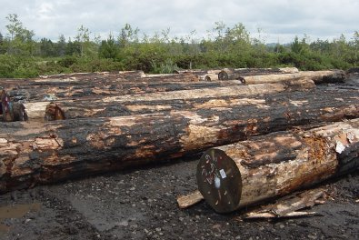 salvage trees from fire