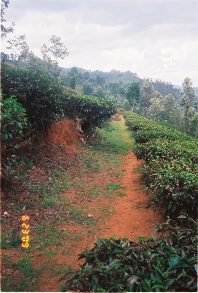 20 acres of land available near Manjoor, Ooty (4/6)