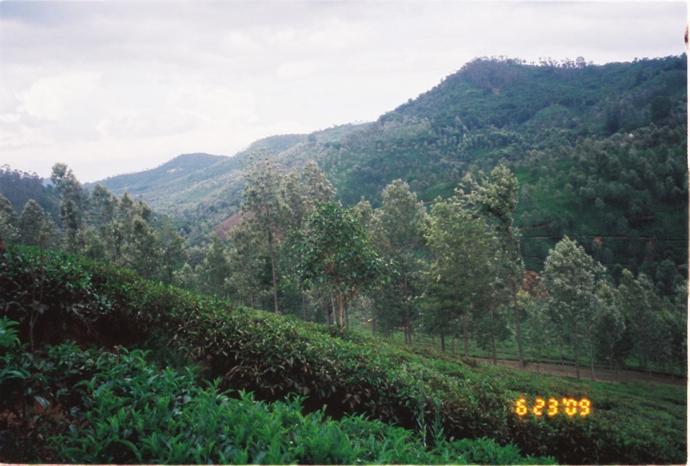 20 acres of land available near Manjoor, Ooty (6/6)