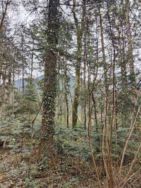 Waldspiele für Kinder