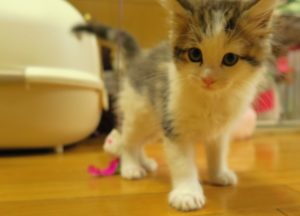 子猫のイメージ