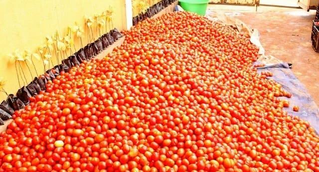 """Fábrica de concentrado de tomate """"inerte"""" no Dombe Grande"""