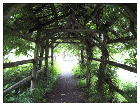 Ethereal Arbor; Mohonk, Mt. House NY (Photography by Joanne Edith)