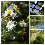 Echo Lake Flora and Fauna (September, 2012)