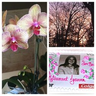 Retirement March 2012: Office Orchid, First Sunrise & Party